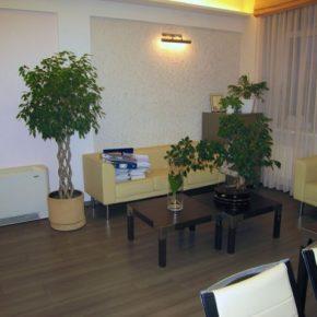 Озелененине офиса - фото (98)